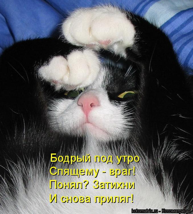 Котоматрица: Бодрый под утро  Спящему - враг! Понял? Затихни И снова приляг!