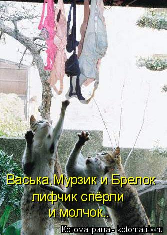Котоматрица: Васька,Мурзик и Брелок лифчик спёрли и молчок..