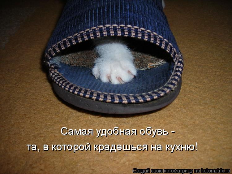 Котоматрица: Самая удобная обувь -  та, в которой крадешься на кухню!