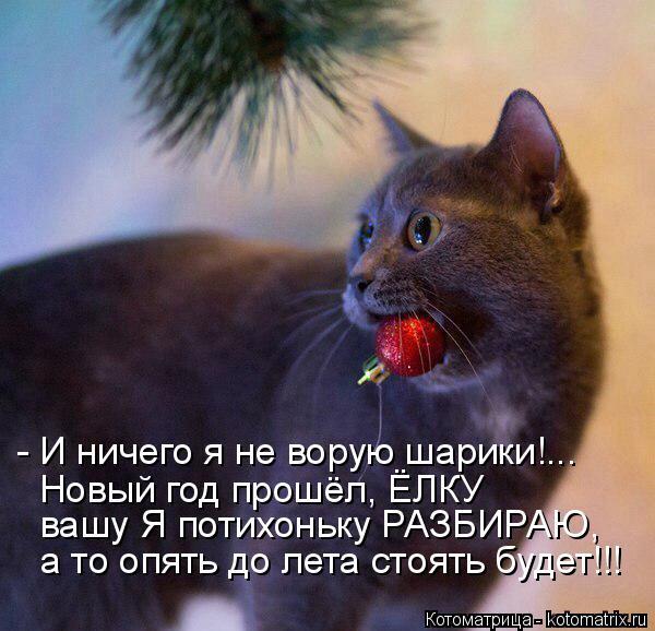 Котоматрица: - И ничего я не ворую шарики!...  Новый год прошёл, ЁЛКУ вашу Я потихоньку РАЗБИРАЮ, а то опять до лета стоять будет!!!
