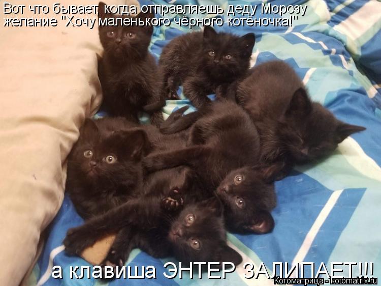 """Котоматрица: Вот что бывает, когда отправляешь деду Морозу желание """"Хочу маленького чёрного котёночка!"""" а клавиша ЭНТЕР ЗАЛИПАЕТ!!!"""