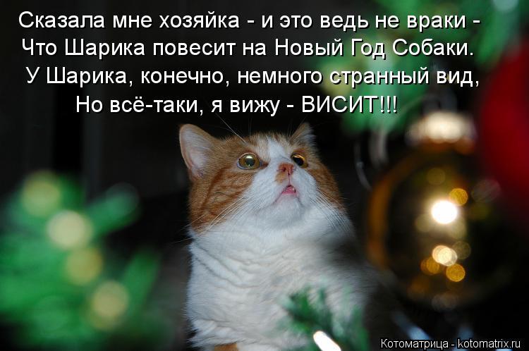 Котоматрица: Сказала мне хозяйка - и это ведь не враки -  Что Шарика повесит на Новый Год Собаки. У Шарика, конечно, немного странный вид,  Но всё-таки, я виж?