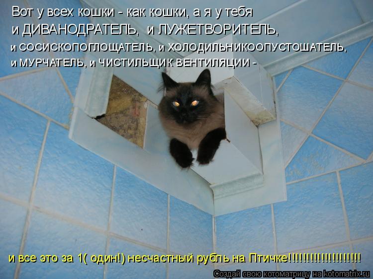 Котоматрица: Вот у всех кошки - как кошки, а я у тебя  и ДИВАНОДРАТЕЛЬ,  и ЛУЖЕТВОРИТЕЛЬ,  и СОСИСКОПОГЛОЩАТЕЛЬ, и ХОЛОДИЛЬНИКООПУСТОШАТЕЛЬ,  и МУРЧАТЕЛЬ, и