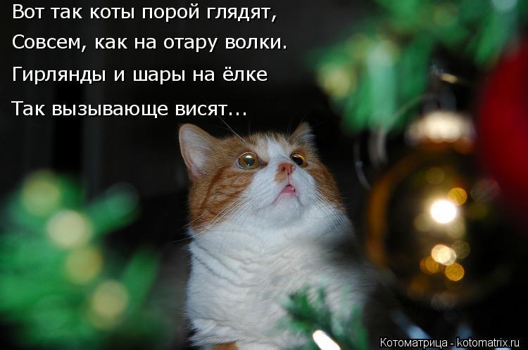 Котоматрица: Вот так коты порой глядят,  Совсем, как на отару волки. Гирлянды и шары на ёлке Так вызывающе висят...