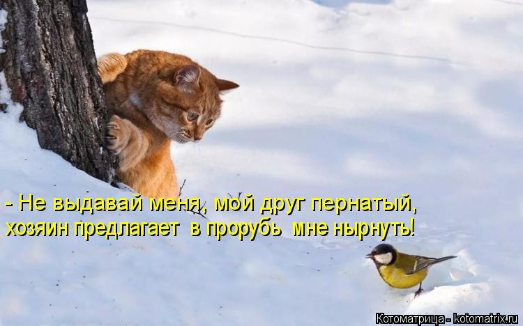 Котоматрица: - Не выдавай меня, мой друг пернатый, хозяин предлагает  в прорубь  мне нырнуть!