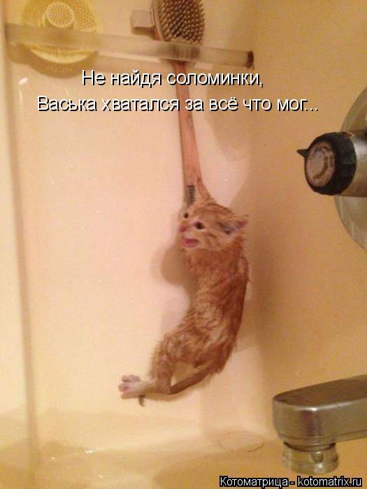 Котоматрица: Не найдя соломинки,  Васька хватался за всё что мог...