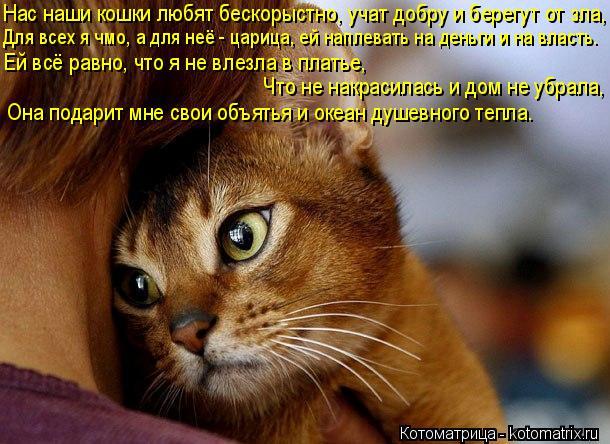 Котоматрица: Нас наши кошки любят бескорыстно, учат добру и берегут от зла, Для всех я чмо, а для неё - царица, ей наплевать на деньги и на власть. Ей всё рав