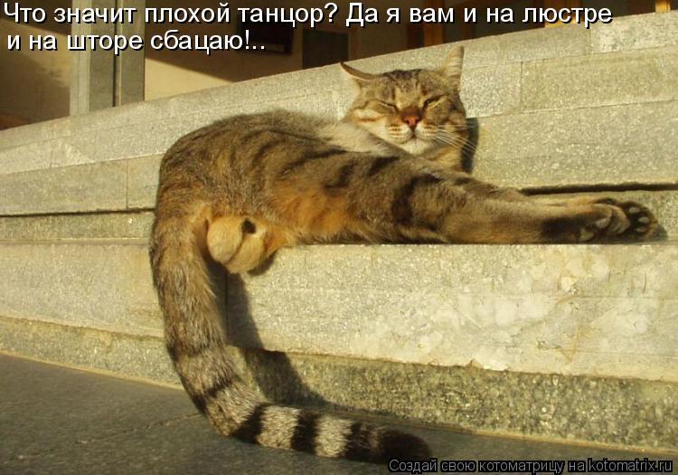 Котоматрица: Что значит плохой танцор? Да я вам и на люстре и на шторе сбацаю!..