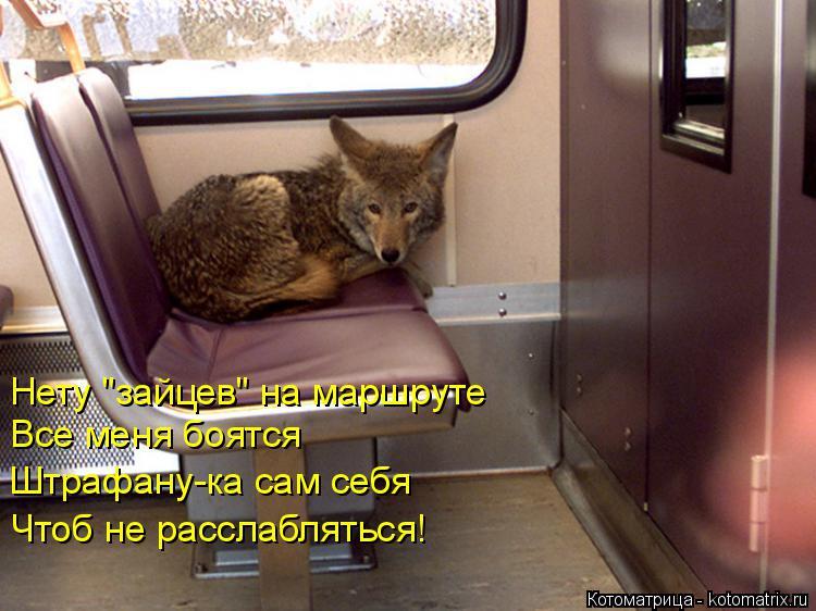 """Котоматрица: Нету """"зайцев"""" на маршруте   Все меня боятся  Штрафану-ка сам себя  Чтоб не расслабляться!"""