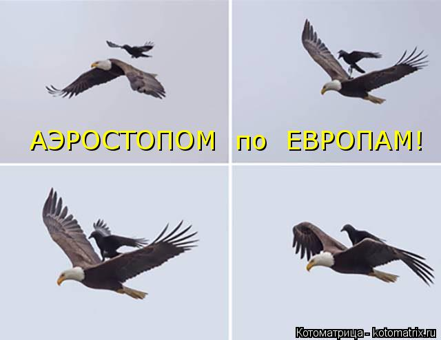 Котоматрица: АЭРОСТОПОМ  по  ЕВРОПАМ!
