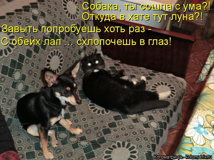 Котоматрица: - Собака, ты сошла с ума?! Откуда в хате тут луна?! Завыть попробуешь хоть раз - С обеих лап ... схлопочешь в глаз!