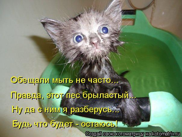 Котоматрица: Обещали мыть не часто... Правда, этот пес брыластый... Ну да с ним я разберусь... Будь что будет - остаюсь!