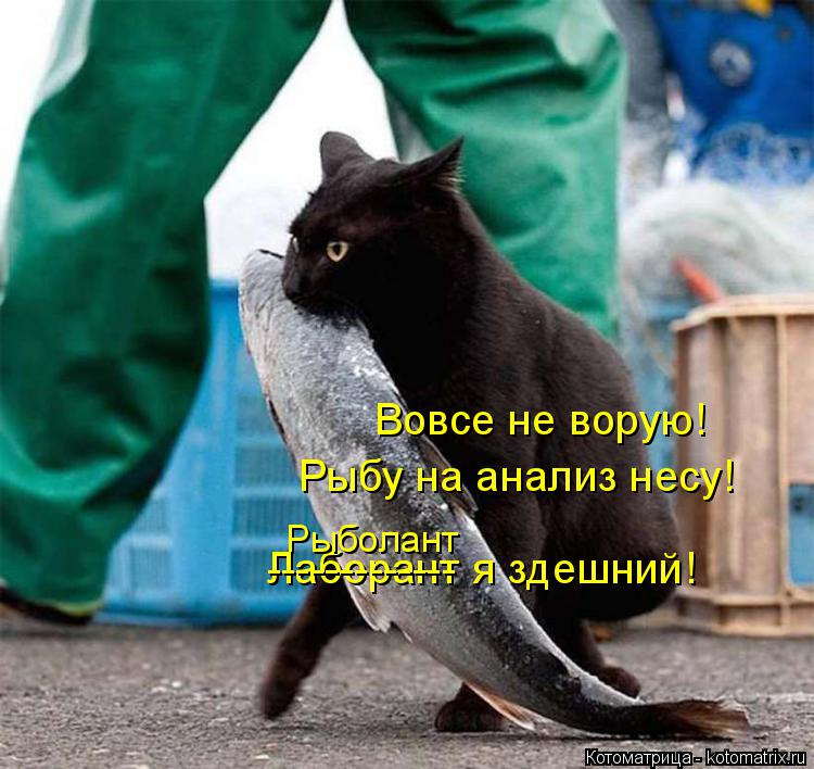 Котоматрица: Вовсе не ворую!  Рыбу на анализ несу!  Лаборант я здешний! ------------- Рыболант