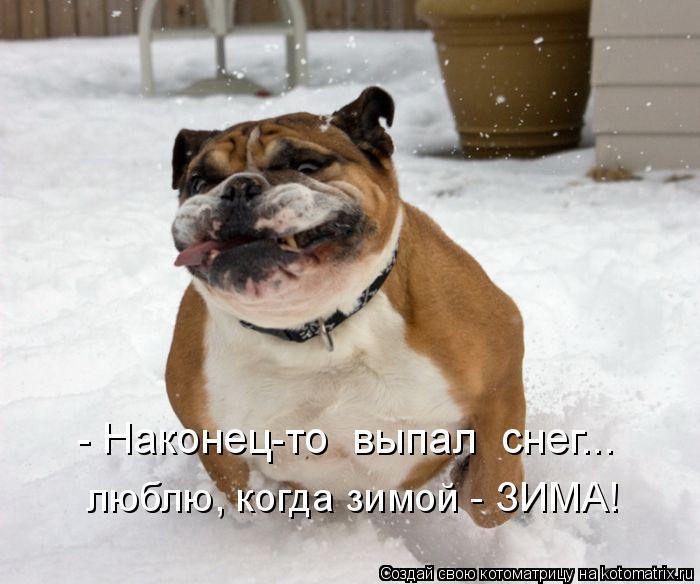 Котоматрица: - Наконец-то  выпал  снег... люблю, когда зимой - ЗИМА!
