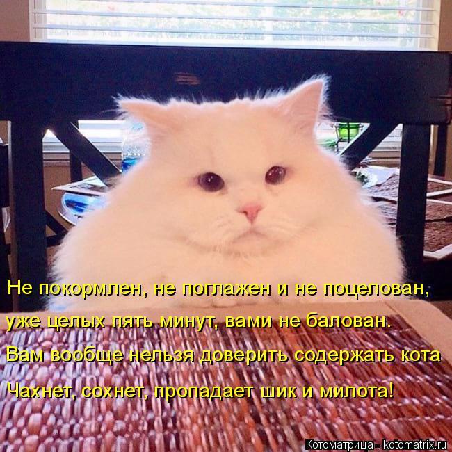 Котоматрица: Не покормлен, не поглажен и не поцелован,  уже целых пять минут, вами не балован. Вам вообще нельзя доверить содержать кота Чахнет, сохнет, пр