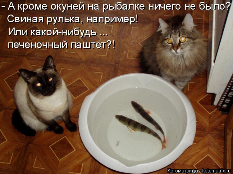 Котоматрица: - А кроме окуней на рыбалке ничего не было? Свиная рулька, например! Или какой-нибудь ... печеночный паштет?!