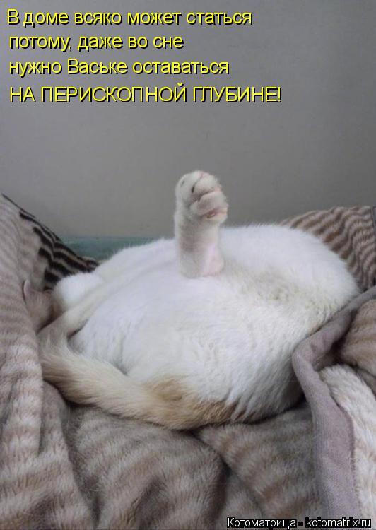 Котоматрица: В доме всяко может статься   потому, даже во сне  нужно Ваське оставаться  НА ПЕРИСКОПНОЙ ГЛУБИНЕ!