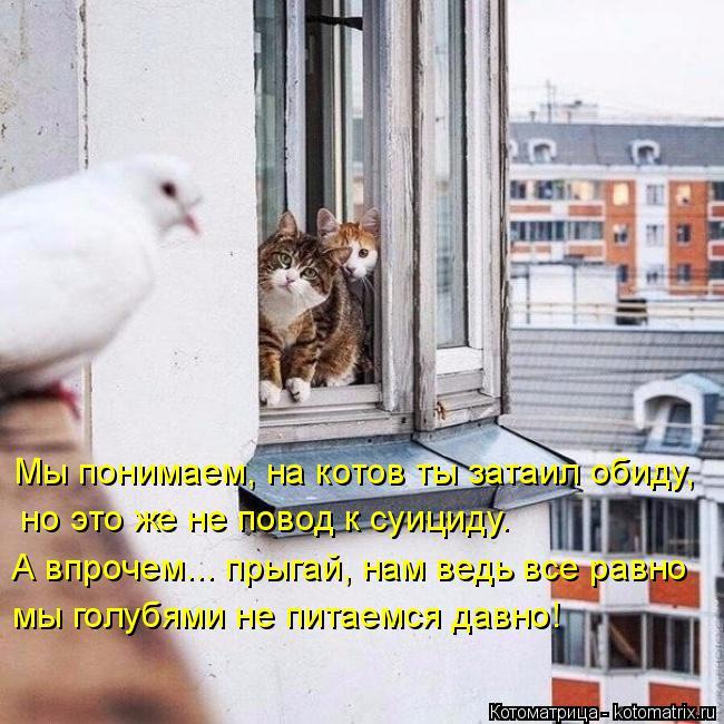 Котоматрица: Мы понимаем, на котов ты затаил обиду,  но это же не повод к суициду.  мы голубями не питаемся давно! А впрочем... прыгай, нам ведь все равно