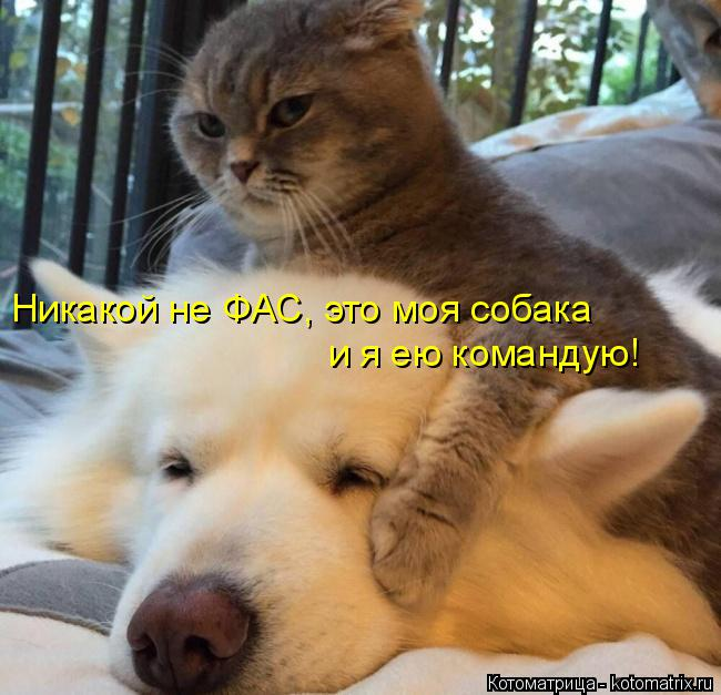 Котоматрица: Никакой не ФАС, это моя собака и я ею командую!