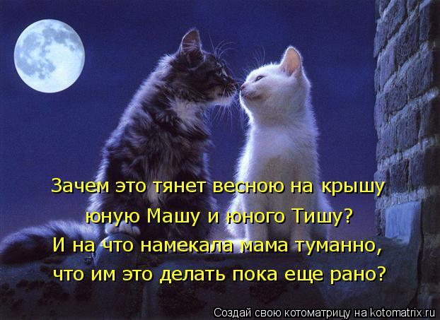 http://kotomatrix.ru/images/lolz/2018/01/27/kotomatritsa_8.jpg