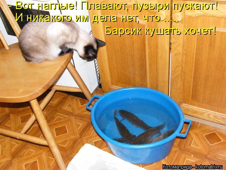 Котоматрица: - Вот наглые! Плавают, пузыри пускают! И никакого им дела нет, что ..... Барсик кушать хочет!