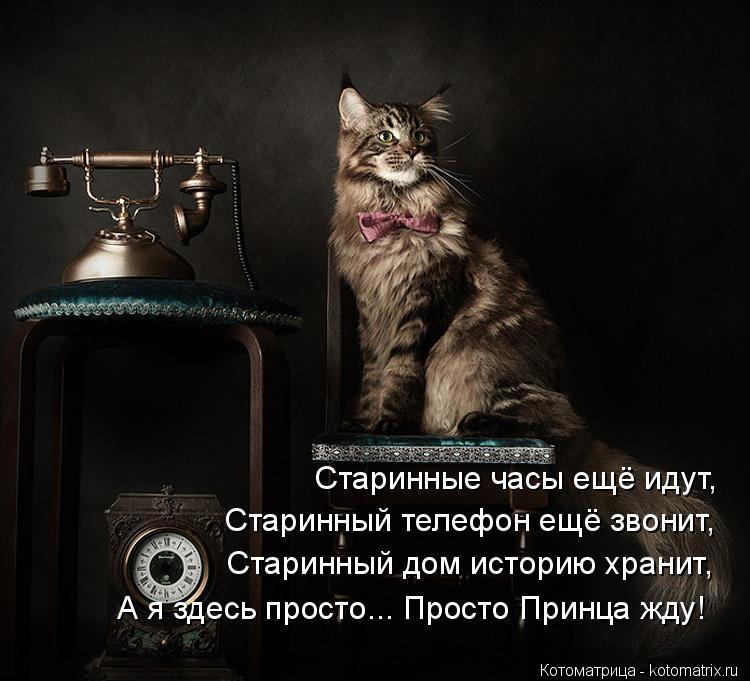 Котоматрица: Старинные часы ещё идут, Старинный телефон ещё звонит, Старинный дом историю хранит, А я здесь просто... Просто Принца жду!