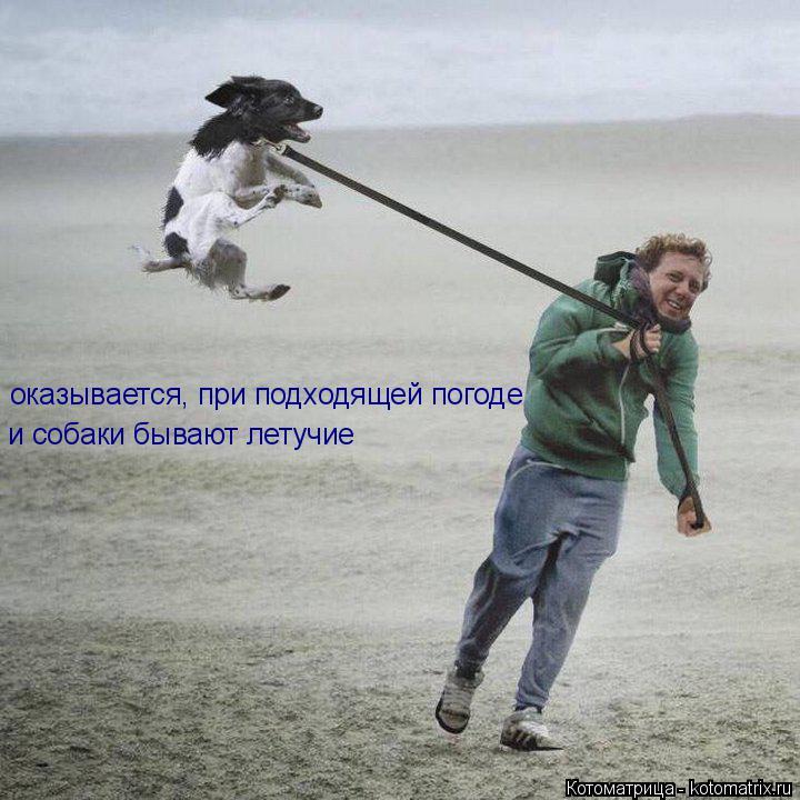 Котоматрица: оказывается, при подходящей погоде и собаки бывают летучие