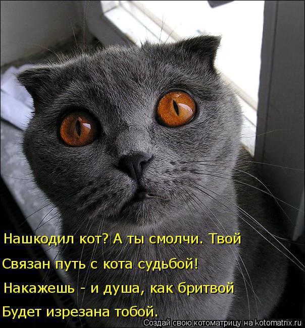 Котоматрица: Будет изрезана тобой. Накажешь - и душа, как бритвой Связан путь с кота судьбой! Нашкодил кот? А ты смолчи. Твой