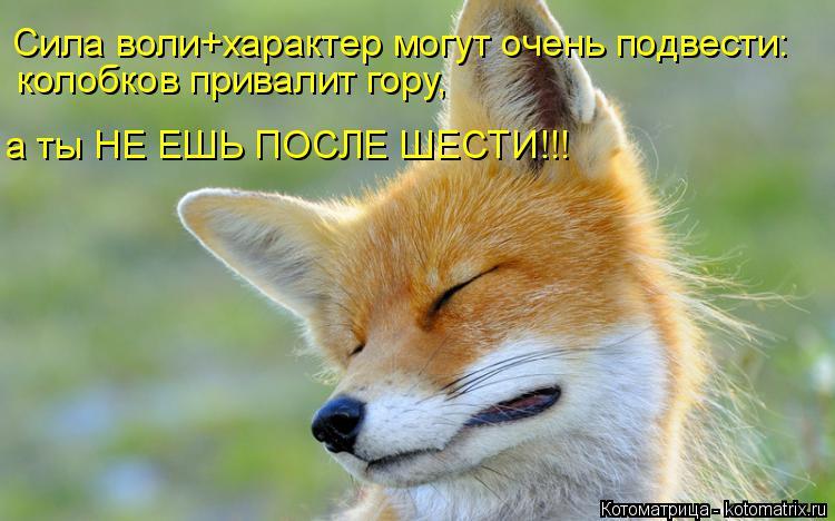 Котоматрица: Сила воли+характер могут очень подвести: колобков привалит гору, а ты НЕ ЕШЬ ПОСЛЕ ШЕСТИ!!!