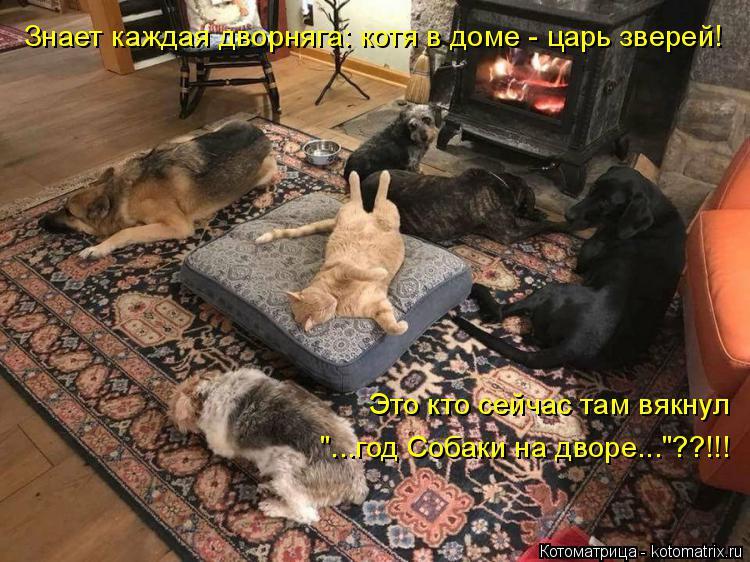 """Котоматрица: Знает каждая дворняга: котя в доме - царь зверей! Это кто сейчас там вякнул  """"...год Собаки на дворе...""""??!!!"""