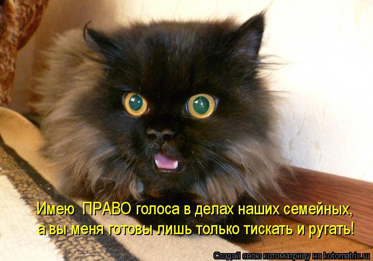 Котоматрица: Имею  ПРАВО голоса в делах наших семейных, а вы меня готовы лишь только тискать и ругать!