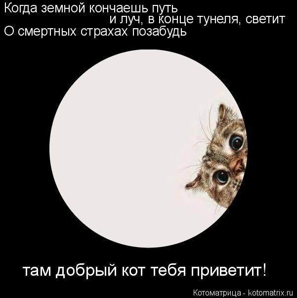 Котоматрица: Когда земной кончаешь путь  и луч, в конце тунеля, светит О смертных страхах позабудь там добрый кот тебя приветит!