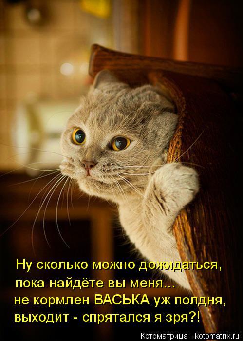 Котоматрица: Ну сколько можно дожидаться,  пока найдёте вы меня... не кормлен ВАСЬКА уж полдня, выходит - спрятался я зря?!