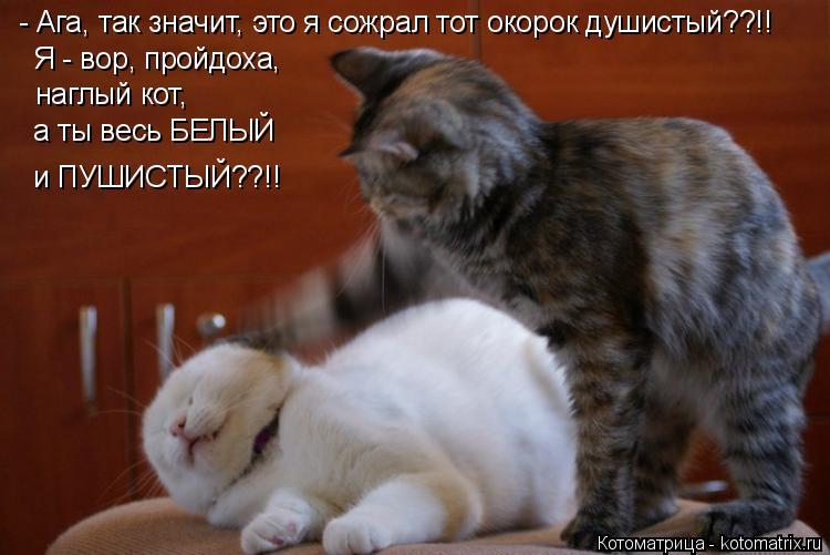 Котоматрица: - Ага, так значит, это я сожрал тот окорок душистый??!! Я - вор, пройдоха, наглый кот, а ты весь БЕЛЫЙ и ПУШИСТЫЙ??!!