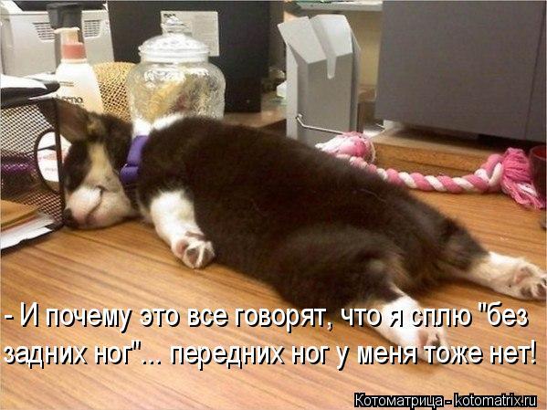 """Котоматрица: - И почему это все говорят, что я сплю """"без задних ног""""... передних ног у меня тоже нет!"""