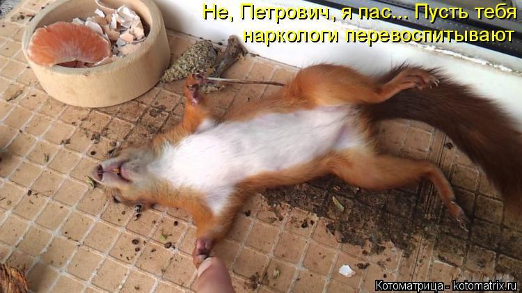 Котоматрица: Не, Петрович, я пас... Пусть тебя наркологи перевоспитывают
