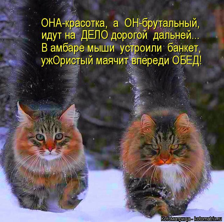 Котоматрица: ОНА-красотка,  а  ОН-брутальный, идут на  ДЕЛО дорогой  дальней... В амбаре мыши  устроили  банкет, ужОристый маячит впереди ОБЕД!