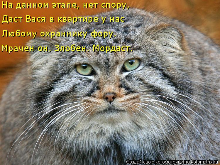 Котоматрица: На данном этапе, нет спору, Даст Вася в квартире у нас Любому охраннику фору. Мрачен он. Злобен. Мордаст.