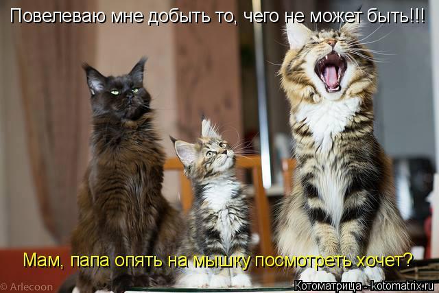 Котоматрица: Повелеваю мне добыть то, чего не может быть!!! Мам, папа опять на мышку посмотреть хочет?