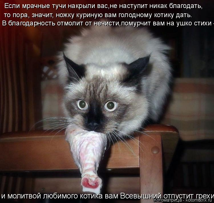 Котоматрица: Если мрачные тучи накрыли вас,не наступит никак благодать,  то пора, значит, ножку куриную вам голодному котику дать. В благодарность отмоли