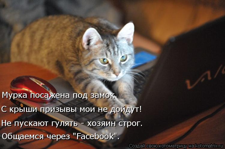 """Котоматрица: С крыши призывы мои не дойдут! Мурка посажена под замок Не пускают гулять - хозяин строг. Общаемся через """"Facebook""""."""