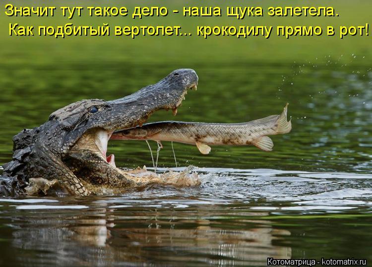 Котоматрица: Значит тут такое дело - наша щука залетела.  Как подбитый вертолет... крокодилу прямо в рот!