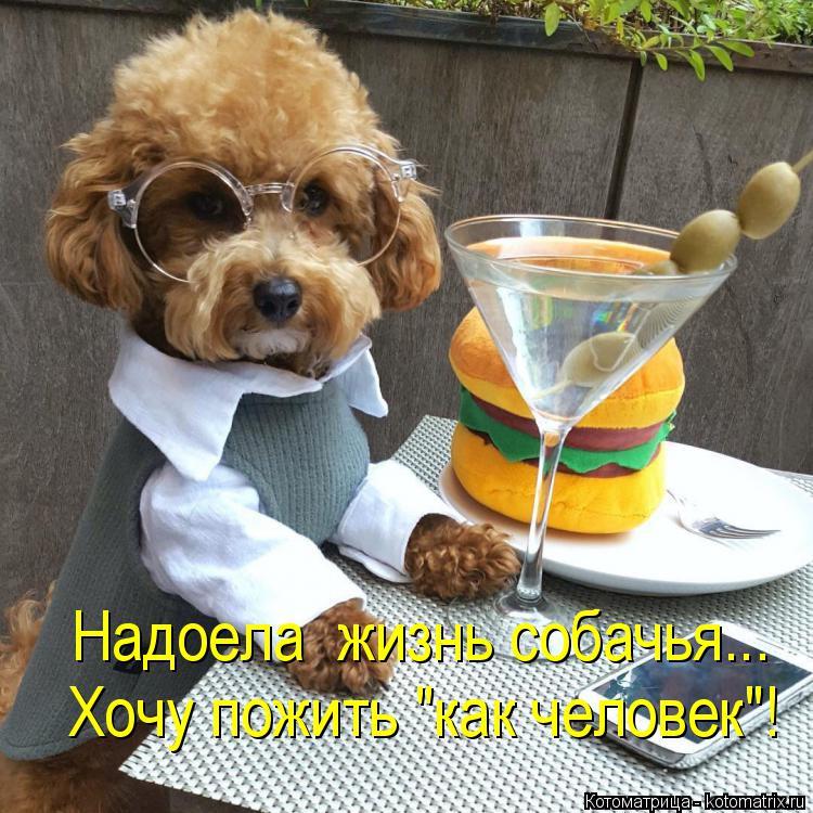 """Котоматрица: Надоела  жизнь собачья... Хочу пожить """"как человек""""!"""
