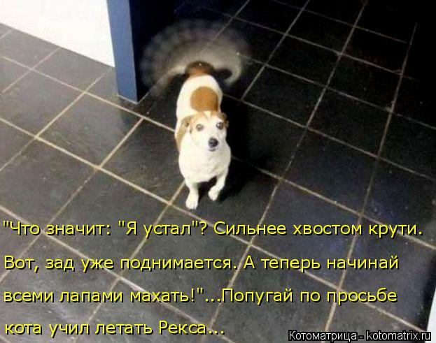 """Котоматрица: """"Что значит: """"Я устал""""? Сильнее хвостом крути. Вот, зад уже поднимается. А теперь начинай всеми лапами махать!""""...Попугай по просьбе  кота учил л"""