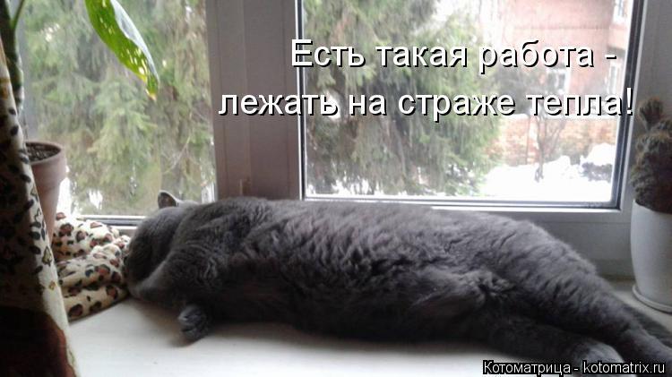 Котоматрица: Есть такая работа -  лежать на страже тепла!