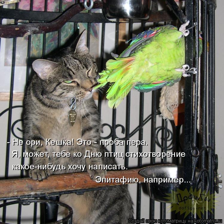 Котоматрица: - Не ори, Кешка! Это - проба пера.  Я, может, тебе ко Дню птиц стихотворение  Эпитафию, например...   какое-нибудь хочу написать.