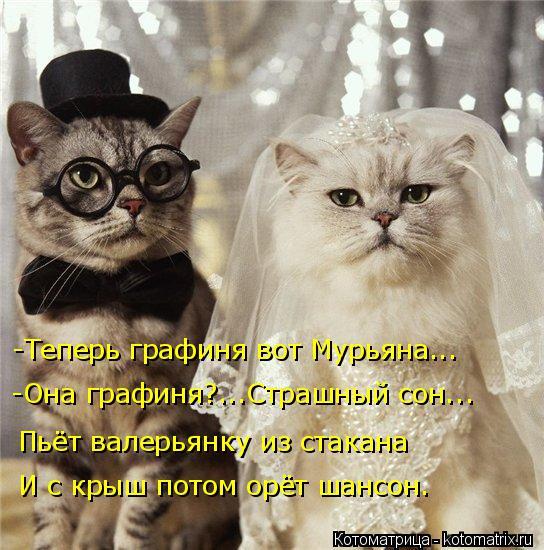 Котоматрица: -Теперь графиня вот Мурьяна... Пьёт валерьянку из стакана -Она графиня?...Страшный сон... И с крыш потом орёт шансон.