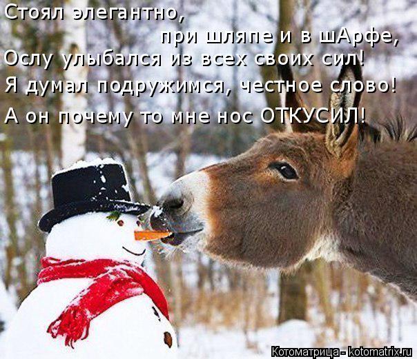 Котоматрица: Стоял элегантно,  при шляпе и в шАрфе, Ослу улыбался из всех своих сил! Я думал подружимся, честное слово! А он почему то мне нос ОТКУСИЛ!