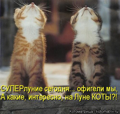 Котоматрица: СУПЕРлуние сегодня... офигели мы, А какие, интересно, на Луне КОТЫ?!