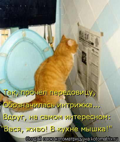 """Котоматрица: """"Вася, живо! В кухне мышка!"""" Вдруг, на самом интересном: Обозначилась интрижка... Так, прочёл передовицу,"""